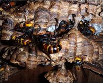 その他害虫イメージ1