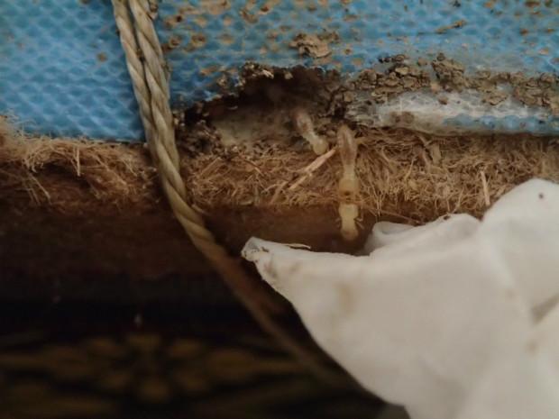 ミツバチ 062